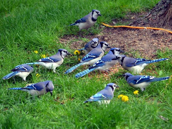 SNAPSHOT - Blue Jays, too many men on the field