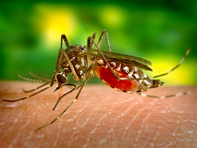 Health Unit confirms presence of West Nile Virus in area